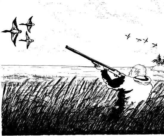 утки прилетели