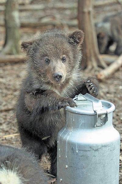 Медвежонок фото