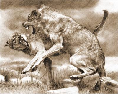 Рисунок волки