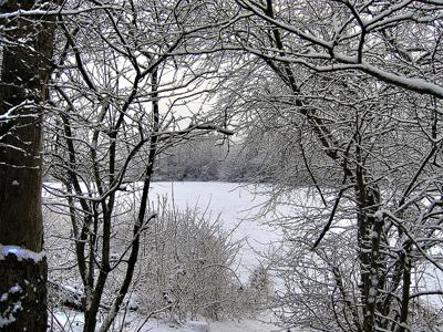 Пейзаж зимний лес