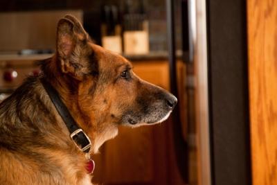 Истории о героях собаках