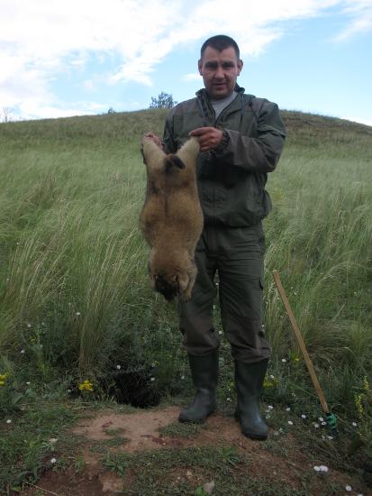 Охота на сурка-байбака