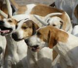 Соревнования охотничьих собак