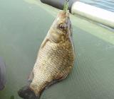 Амурская рыба