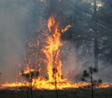 природное возгорание