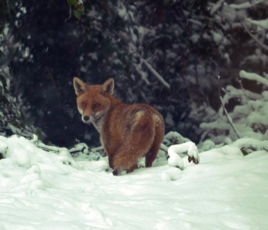 Зимний охотничий сезон