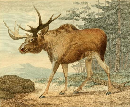 убил лося