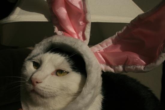 Добыча зайцев