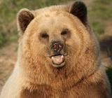 Отстрел медведя