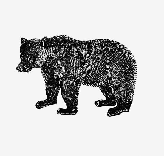 крупная медведица