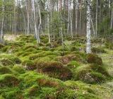 Болотистый лес