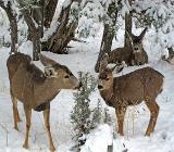 Копытные животные в снегу