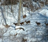 Косули в лесу фото
