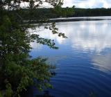 берег лесного озера