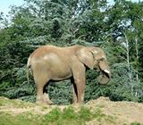 Слон животное