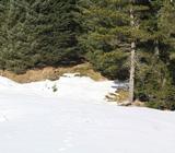 Фото зимний лес