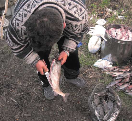 рыбные потрошки