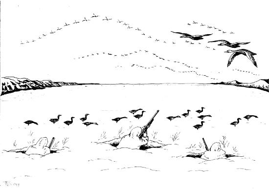 Охота на пернатых