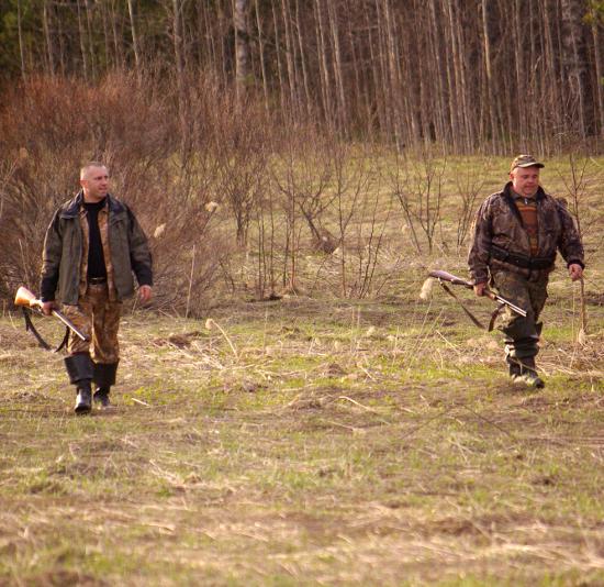 Охота на селезня утки