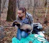 здоровье диких животных