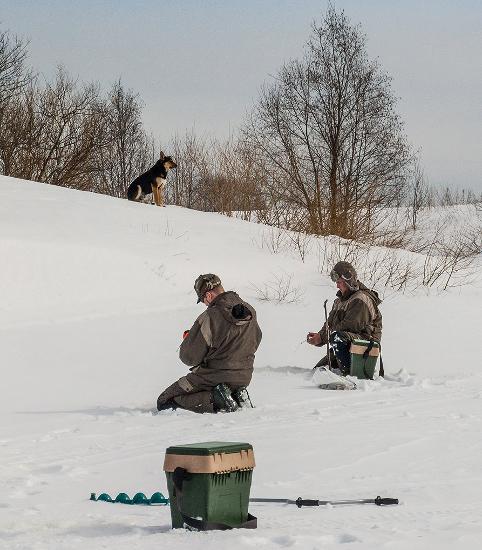 Пес на рыбалке