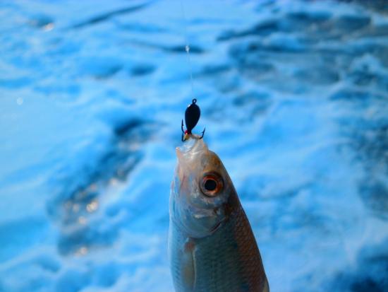 ловля рыбы в январе