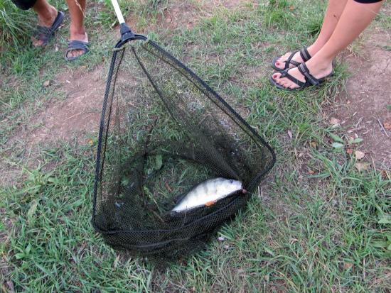 наловили рыбки