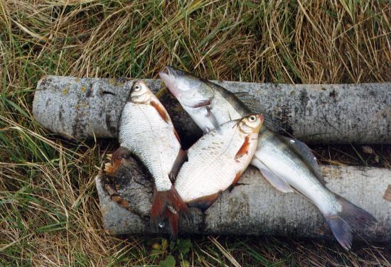 рыбалка на реке Хопер