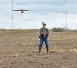 ловчая птица