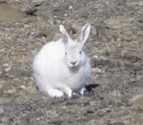 Отстрел зайцев