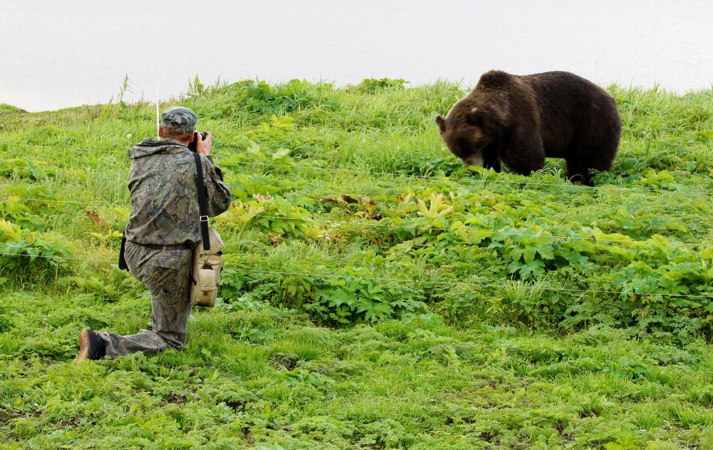 На Камчатке уничтожили медведя-убийцу
