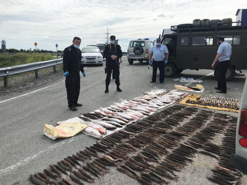 Иртыш очистили от сотен незаконных орудий лова