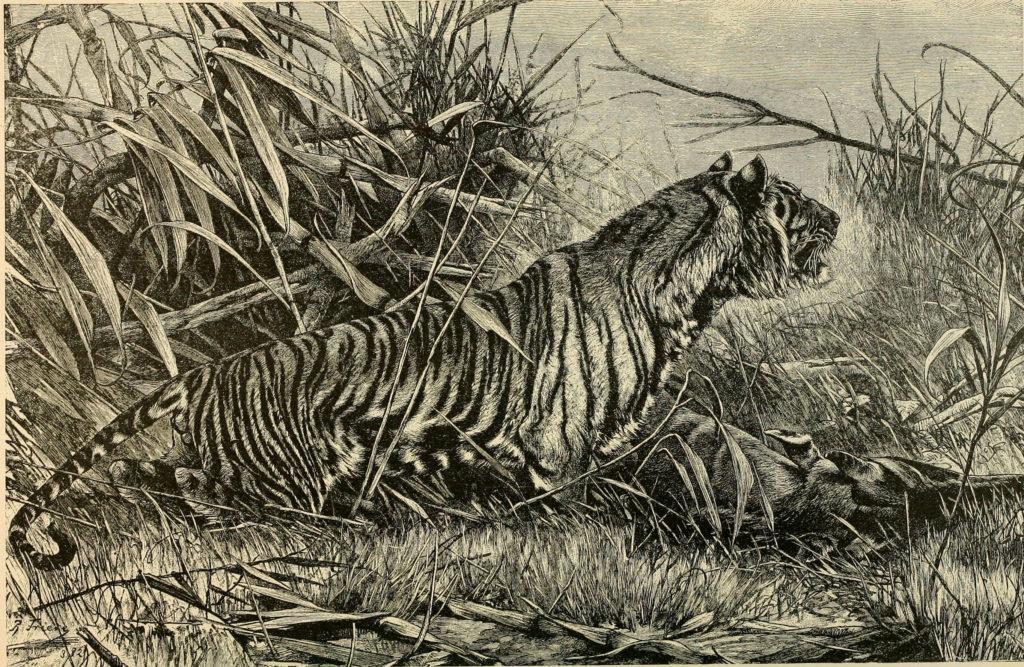 Тигры в Кульджинском paйоне. Часть вторая