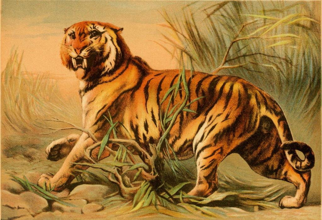 Тигры в Кульджинском paйоне. Часть третья