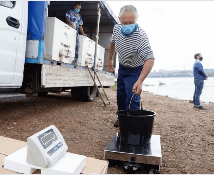 В Башкирии выпустили сотню тысяч мальков стерляди