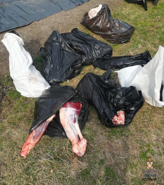 Браконьеры заплатили за незаконную охоту на косуль в Омской области