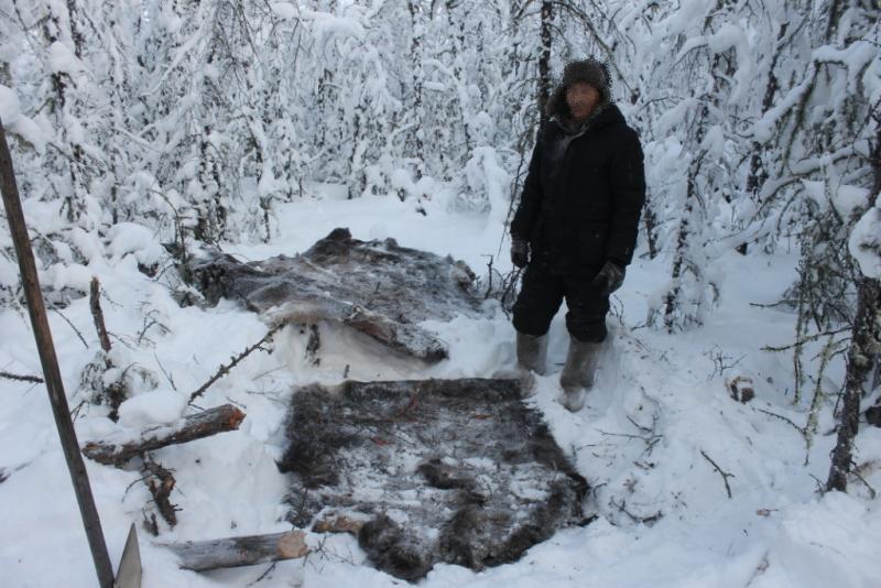 В Якутии браконьеры ответят за незаконную добычу копытных