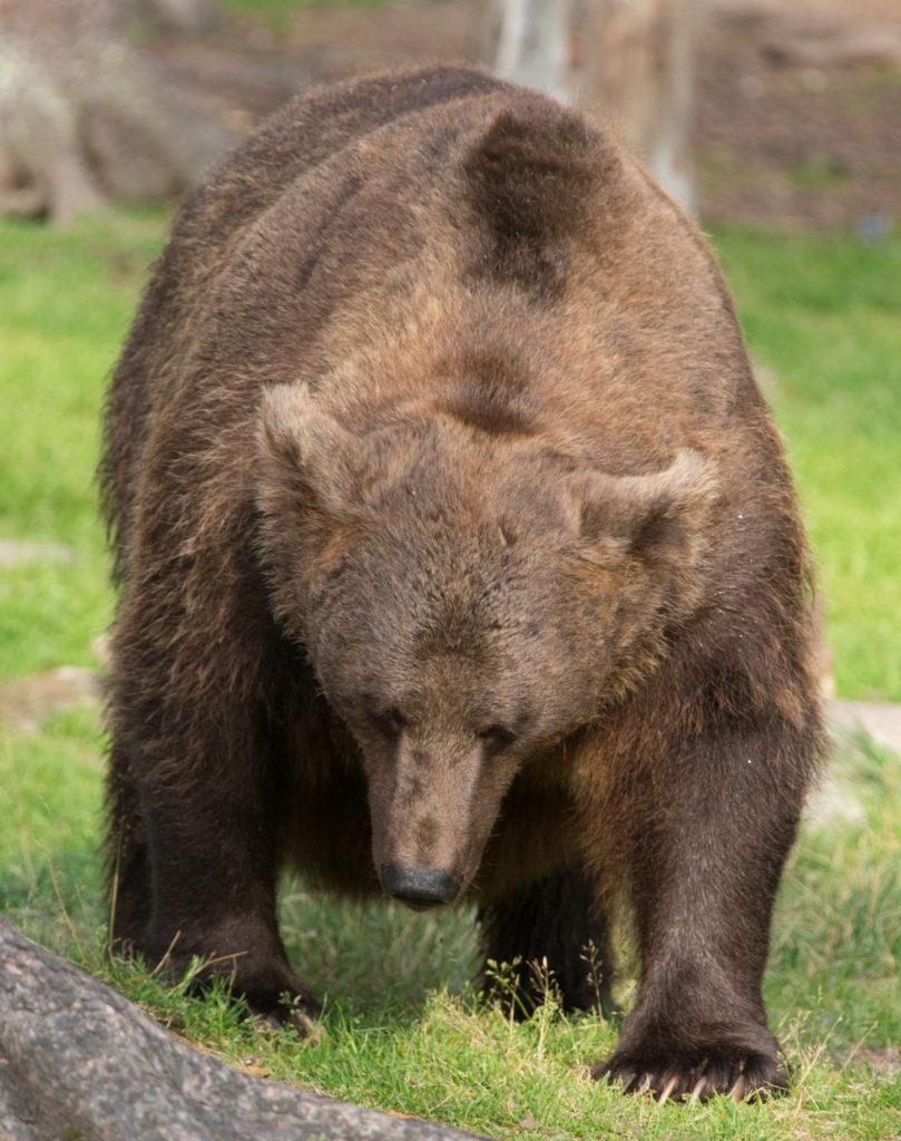 В Якутии грибники отбились от медведя