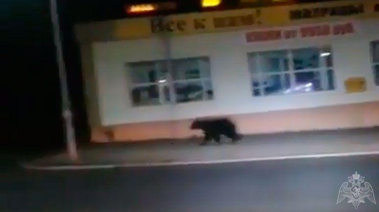В «столице» Камчатки ведут охоту на неуловимого медведя