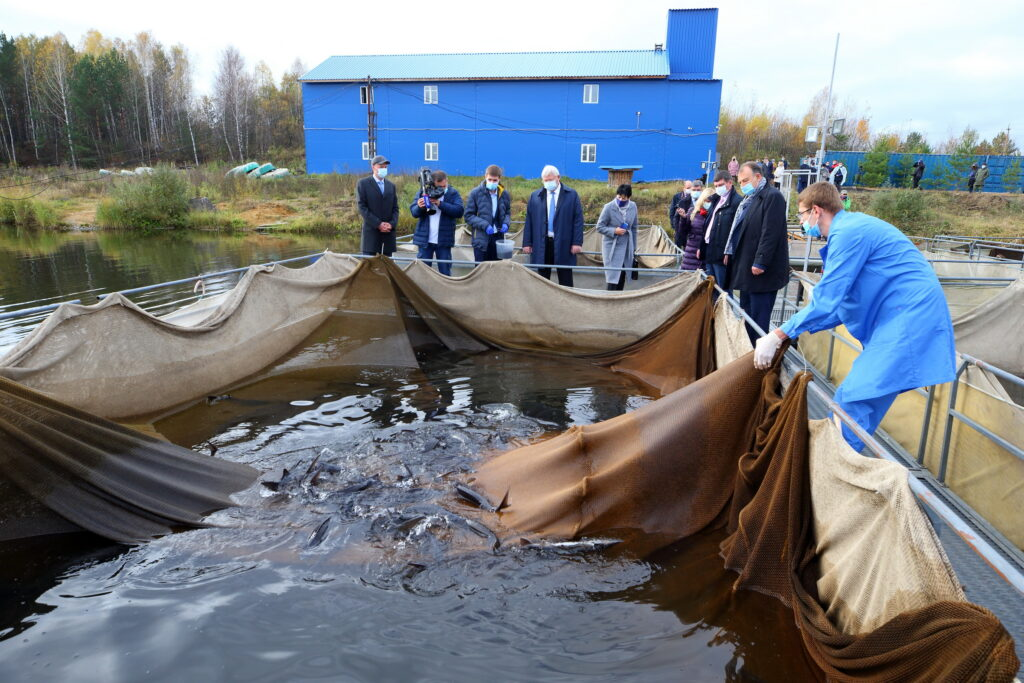 В Томской области заработал новый комплекс по выращиванию осетровых и сиговых