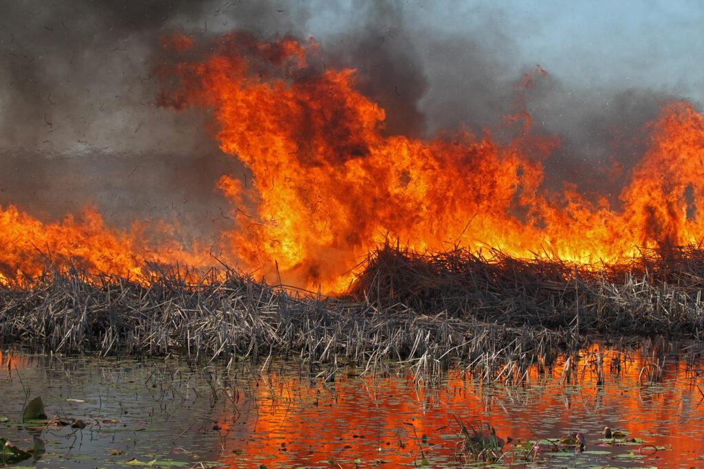 В Воронежской области приостановили охоту из-за пожаров