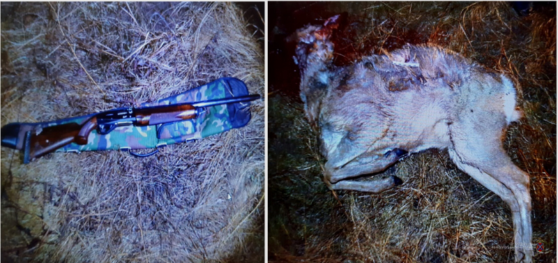 В Волгоградской области поймали браконьера с тушей косули