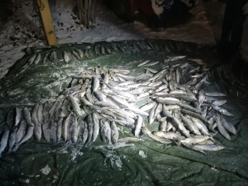 В Бурятии браконьер наловил омуля на два миллиона рублей