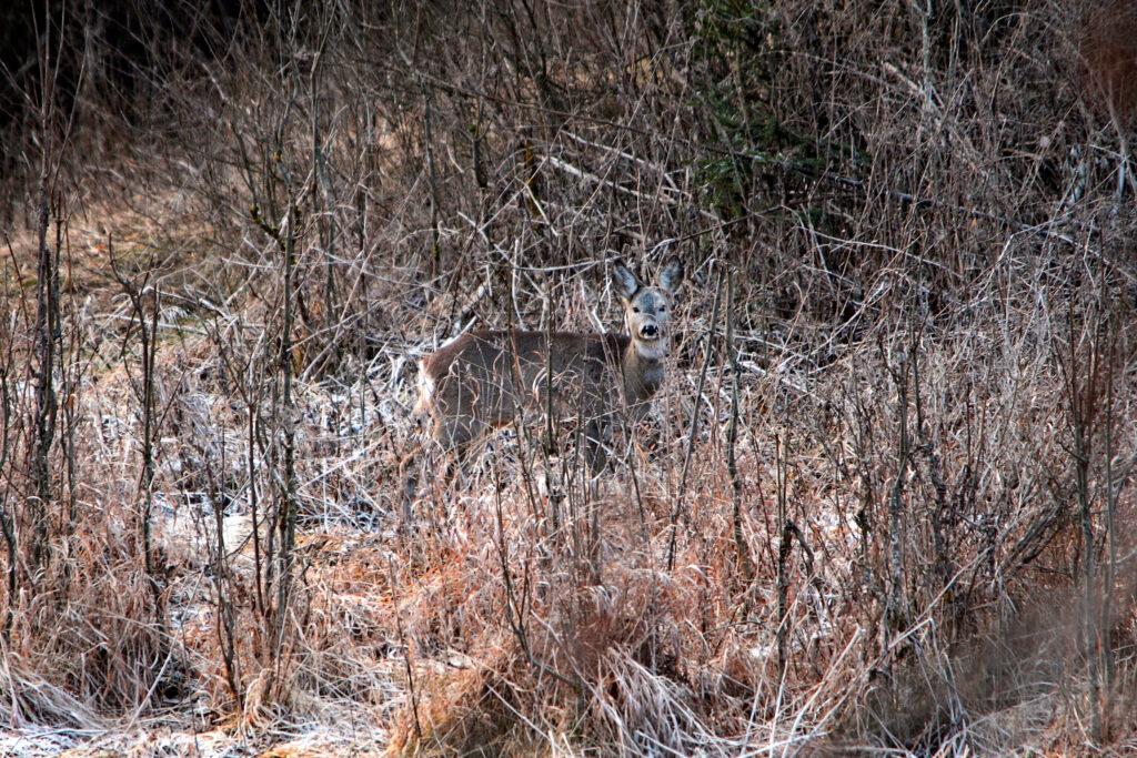 В Оренбуржье задержан участник нелегальной охоты на копытных