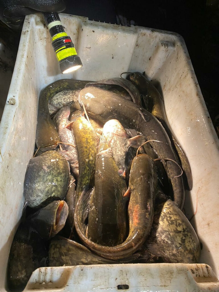 В Тамбовской области сотрудники рыбоохраны спасли около 400 обитателей водоема