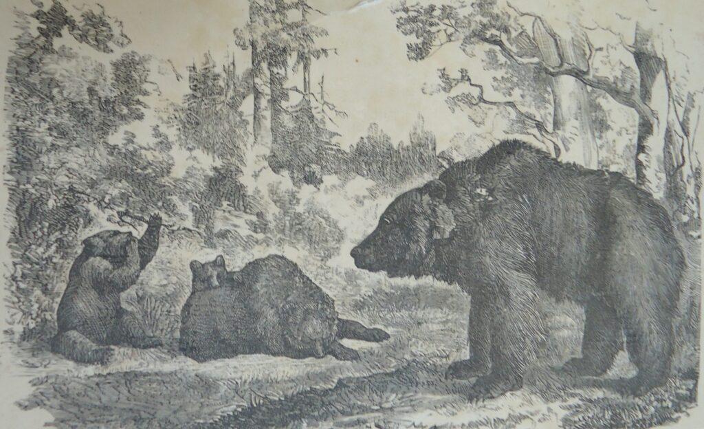 Охота в Тункинском крае. Часть четвертая