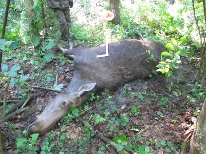 В Смоленской области вынесли приговоры охотникам-браконьерам