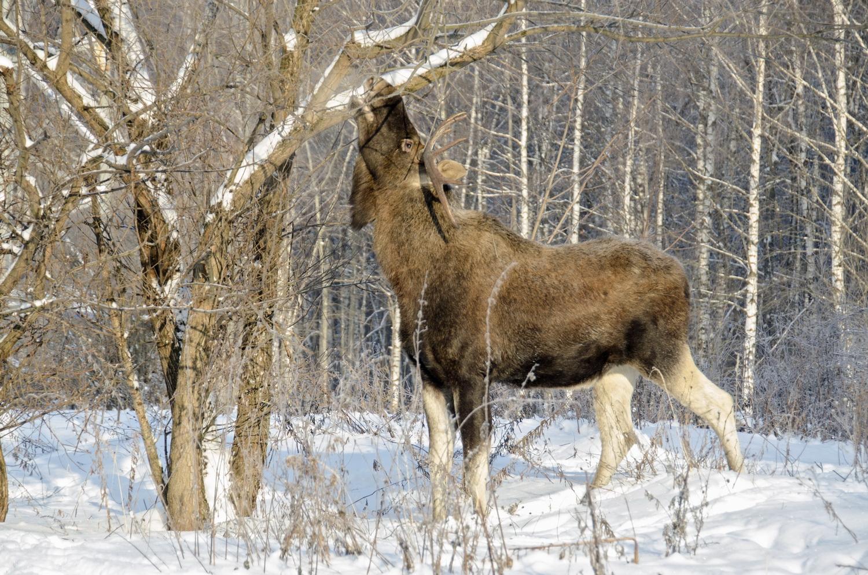 Свердловская область. Сроки охоты-2021