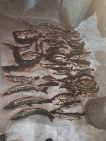 В Красноярском крае на скамье подсудимых окажутся рыбаки-браконьеры