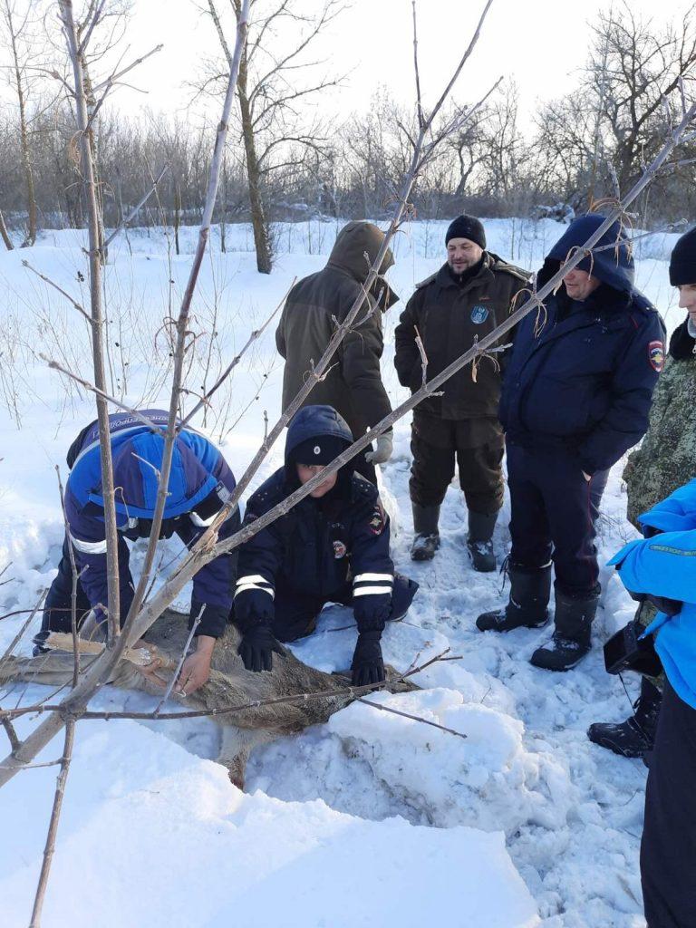 В Самарской области спасли раненую косулю